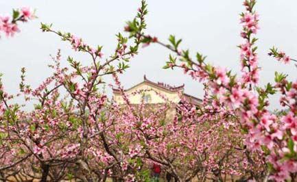 桃花春色暖先开,明媚谁人不看来