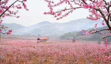 桃花仙人种桃树