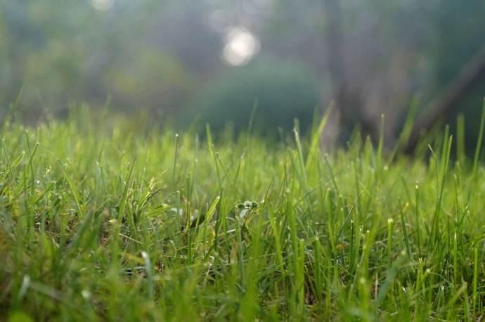 离离原上草