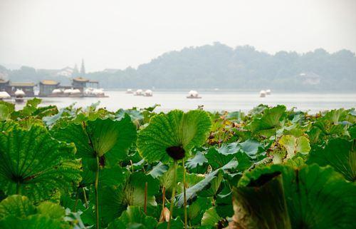 未能抛得杭州去,一半勾留是此湖。
