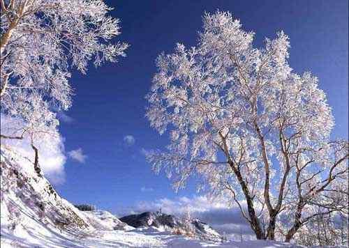 北风卷地白草折,胡天八月即飞雪