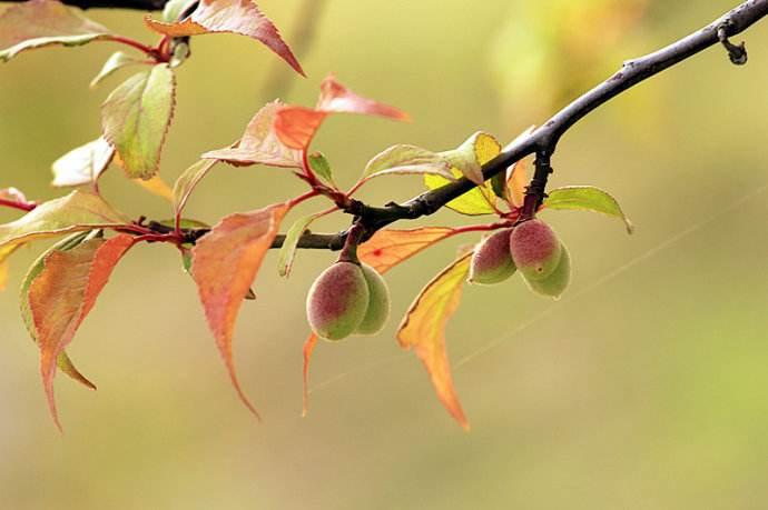 花褪残红青杏小。燕子飞时,绿水人家绕。枝上柳绵吹又少。天涯何处无芳草。