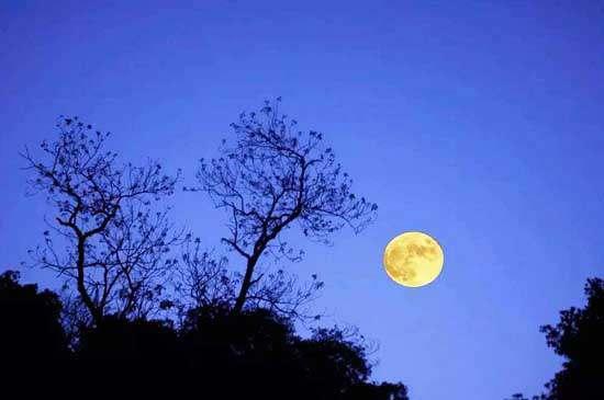 梦到故园多少路,酒醒南望隔天涯。月明千里照平沙。