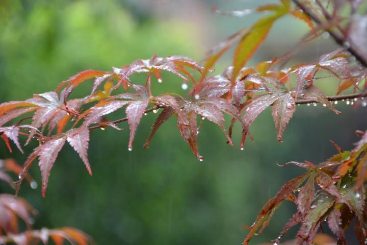 绮席凝尘,香闺掩雾。红笺小字凭谁附。高楼目尽欲黄昏,梧桐叶上萧萧雨。