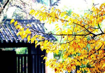 金风细细。叶叶梧桐坠。绿酒初尝人易醉。一枕小窗浓睡。