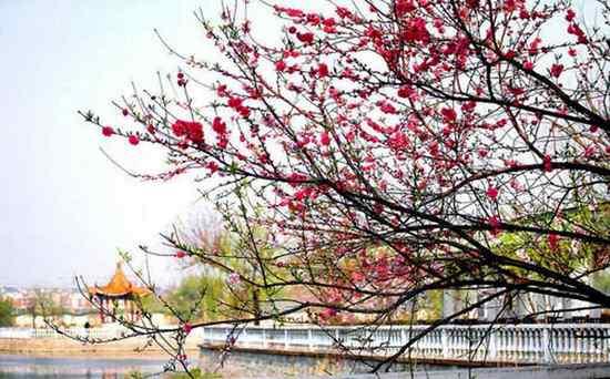春色满园关不住 ,一枝红杏出墙来.