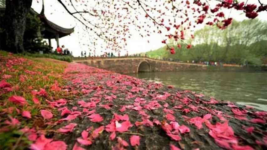 落红不是无情物,化作春泥更护花。