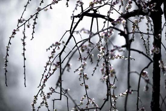 三月东风吹雪消,湖南山色翠如浇。