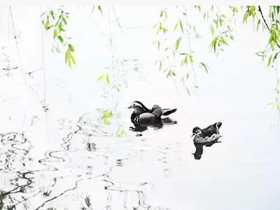 关关雎鸠 ,在河之洲。